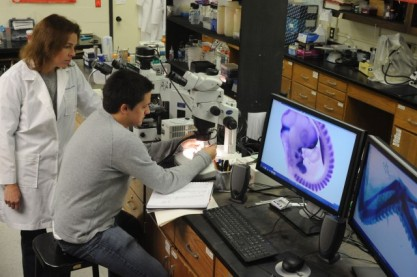 Loyola biology lab regenerates elbow joints